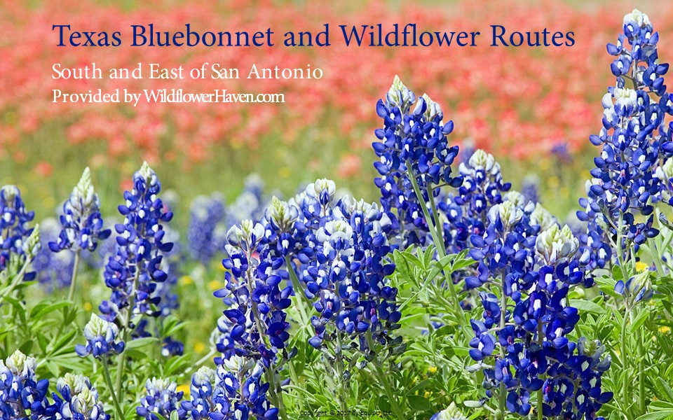 Texas Bluebonnet Routes - South/East of San Antonio