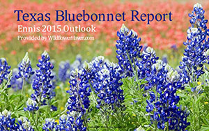 Texas Bluebonnet Report - Ennis 2015