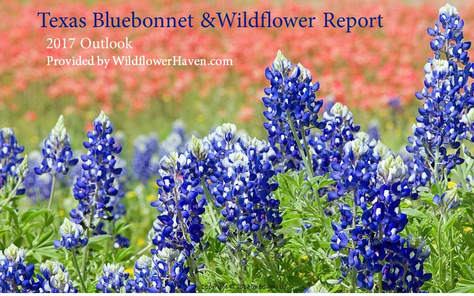 Texas Bluebonnet and Wildflower Report - 2017 Outlook